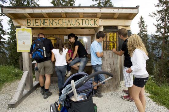 Wagrainis Grafenberg - Sommerurlaub - Wagrain - Kleinarl - Salzburger Land - Ferienwohnungen - Ortnerbauer