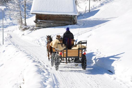 Pferdeschlittenfahrten - Winterurlaub - Wagrain - Salzburger Land - Zimmer - Ferienwohnungen - Ortnerbauer